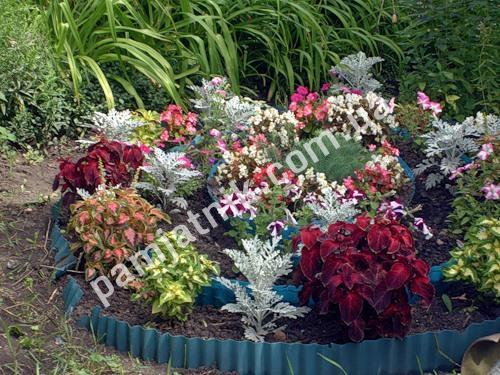 Как украсить участок декоративными растениями и цветами